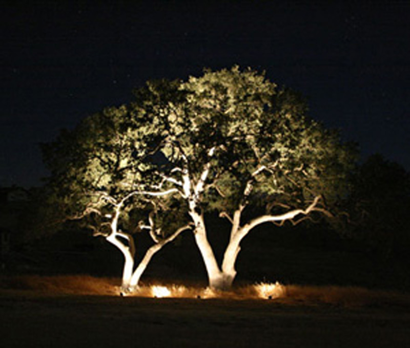 Focal Tree Uplighting
